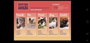 Doação de gatos - adoção responsável