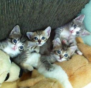 Doação filhote de gatinhos lindos