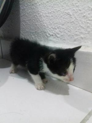 Doação responsavel gato macho filhote