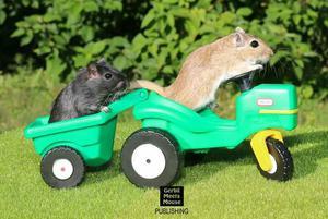 Esquilinhos brincalhões mansinhos é na roevix !!!