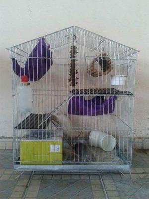 Gaiola completa para roedores!