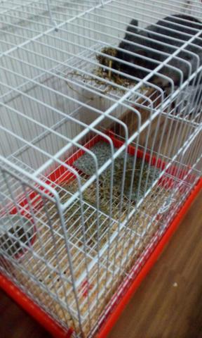 Gaiola roedores