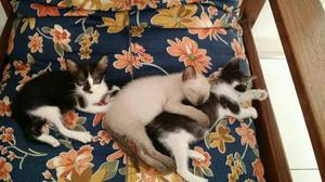 Gatinhos para adoção *-