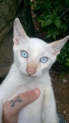 Gato p/ doação