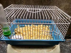 Hamster anão-russo/chinês + gaiola