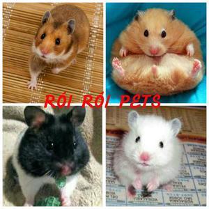 Hamster sirios