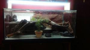Terrario ou aquário