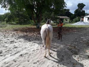 Venda permanente de cavalos quarto de milha para vaquejada e