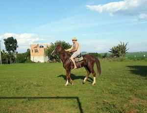 Vende cavalo manga larga paulista