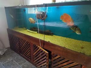 Aquario 600 Litros Completo