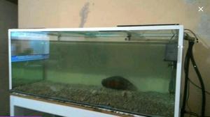 Aquario grande