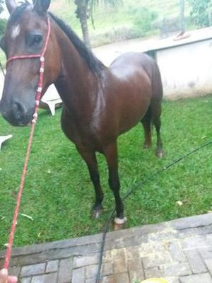 Cavalo de charrete leia o anúncio