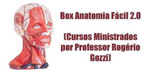 Box anatomia fácil