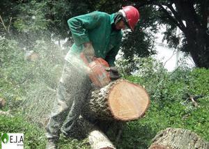 Poda e corte de árvores - região de campinas