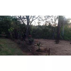 Manutenção de jardim e limpeza de terreno