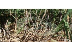 Fazenda agrícola - dourados - ms (6572)