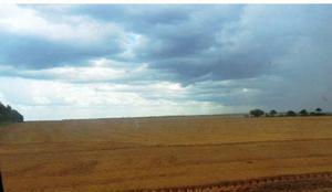 Fazenda agrícola - pedro afonso - to (6103)