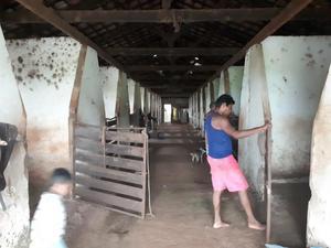Alugo baia para cavalos e gado p.o