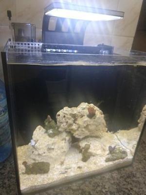 Aquario 55 litros marinho