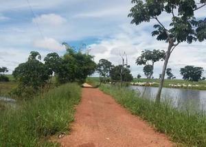 Cod1019 fazenda em nova xavantina mato grosso 2.000 hectares