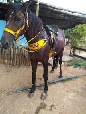 Cavalo manga larga p.o