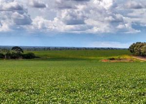 Excelente fazenda com 1.600 hectares em nova maringá mt