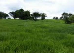 Excelente fazenda com 1.640 hec na região de campo grande