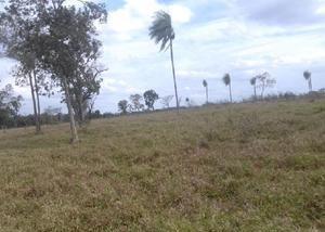 Excelente fazenda para lavoura com 300 hectares em jardim ms