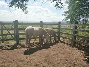 Eguas, potros, cavalos.