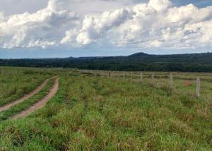 Fazenda com 1.500 hectares região de são gabriel do oeste