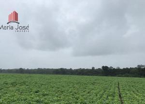 Fazenda 5.895 hectares-tocantins - agriculturapecuária