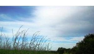 Fazenda agrícola - palmas - to (6586)