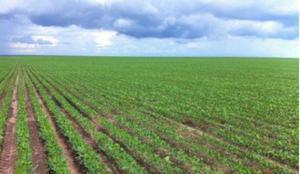 Fazenda agrícola - piauí - pi - aceita permuta (6630)