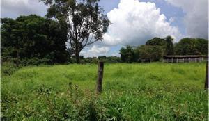 Fazenda agropecuária em acreúna - go (6265)