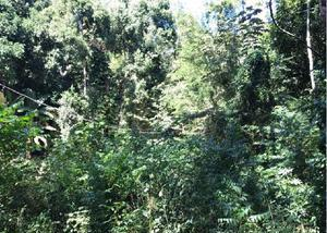 Fazenda de 1975 hectares com mata nativa por r$1.600 ha.