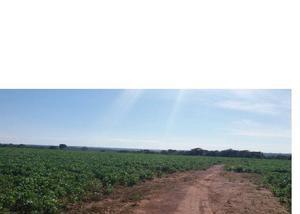 Fazenda para lavoura de 228 alqueires - em ipameri go.