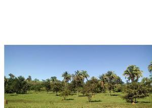 Fazenda para pecuária de 190 alqueires em caldas novas go.