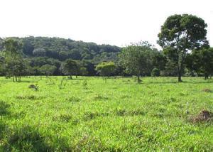 Fazenda sitio 14 alqueires (68.10 ha) perdigão-mg