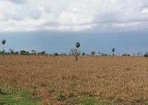 Linda fazenda com 274 alqueires na região de naviraí ms