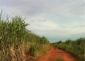 Linda fazenda com 3.000 hectares na região de pirapozinho