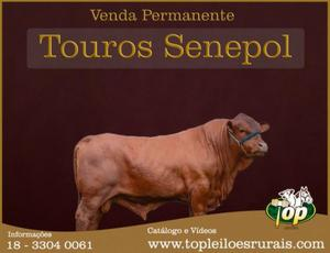 Leia o anúncio!!! lote fechado com 7 tourinhos senepol po