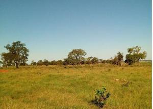 Oportunidade de fazenda com 513 alq nova alvorada do sul ms