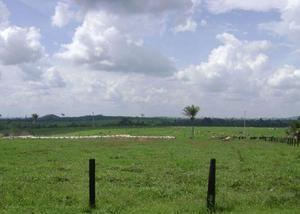Oportunidade fazenda com 5.875 hectares em alta floresta mt