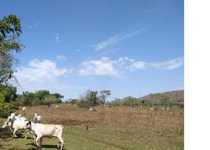 Oportunidade fazenda com 7.750 hectares região de cuiabá