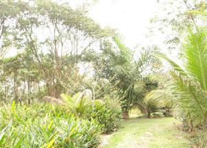 Sitio plano com área de 20.000,00 m² cachoeiras macacu