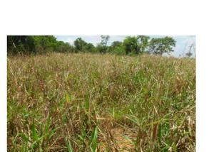 Terreno pasto arrendar perto de belo horizontesete lagoa mg