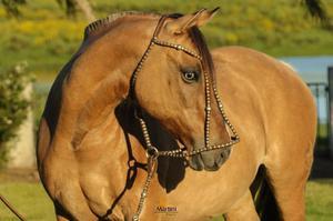 Venda de cavalos crioulos (direto com o proprietário)