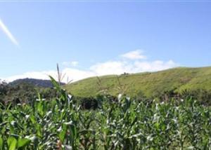 Sitio altamente produtivo 3 hectares, terra de agricultura