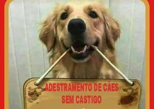 Adestramento de cães sem castigo-treinador inglês