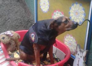 Cléo - linda cachorrinha para adoção responsável - sp